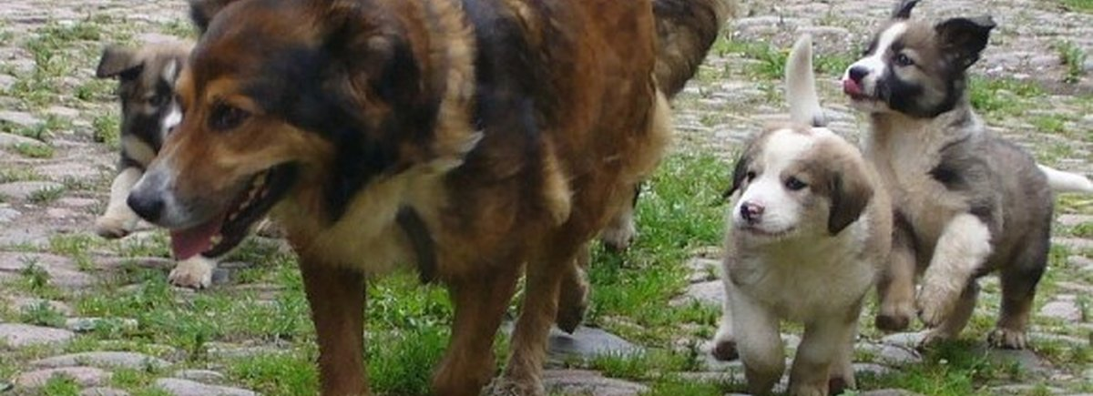 Hotel amici del cane
