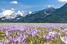 Primavera in Tirolo